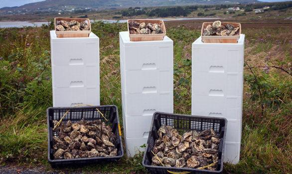 Irish Premium Oysters 3