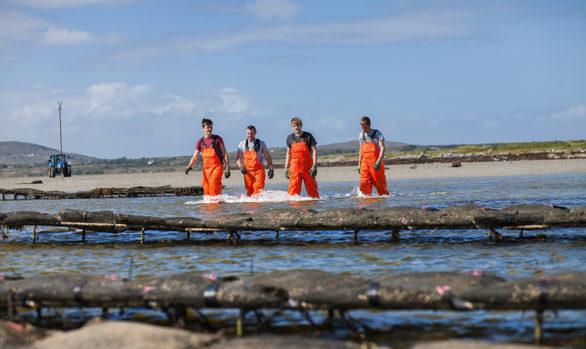 Irish Premium Oysters 5