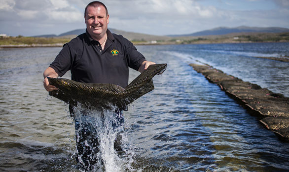 Irish Premium Oysters 8