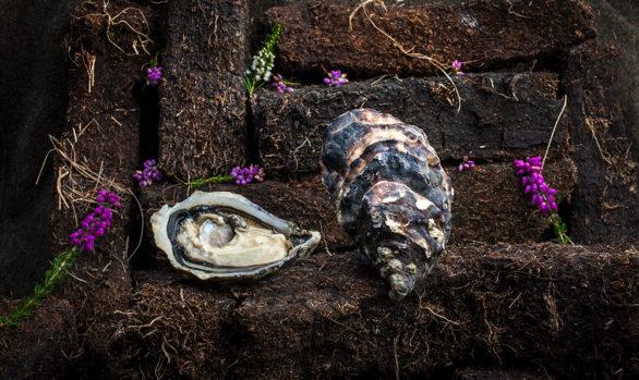 Irish Premium Oysters 10