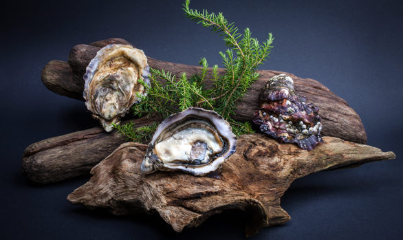Irish Premium Oysters 7